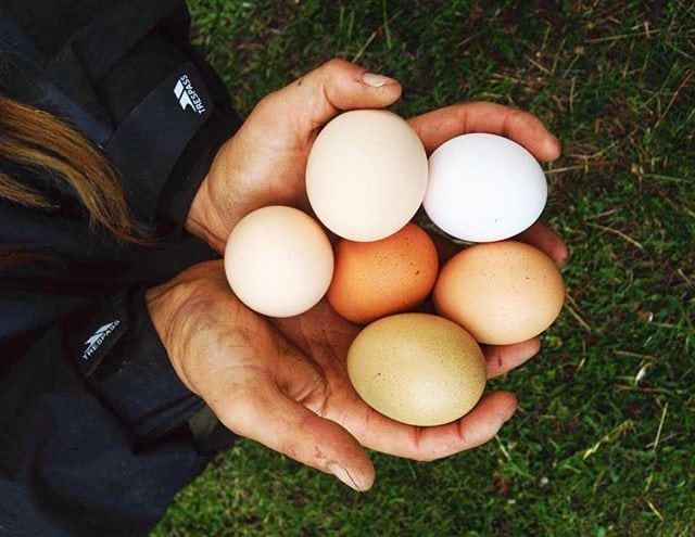 angelica's farm fresh eggs