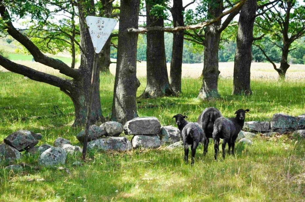 Brösarp-Kivik mellan Haväng och Kungsmölle
