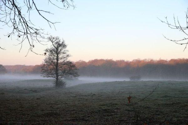 en kylig morgondimma med snopinnarna pa plats österlen.se