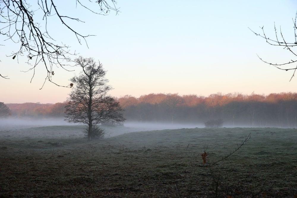 En kylig morgondimma med snöpinnarna på plats.
