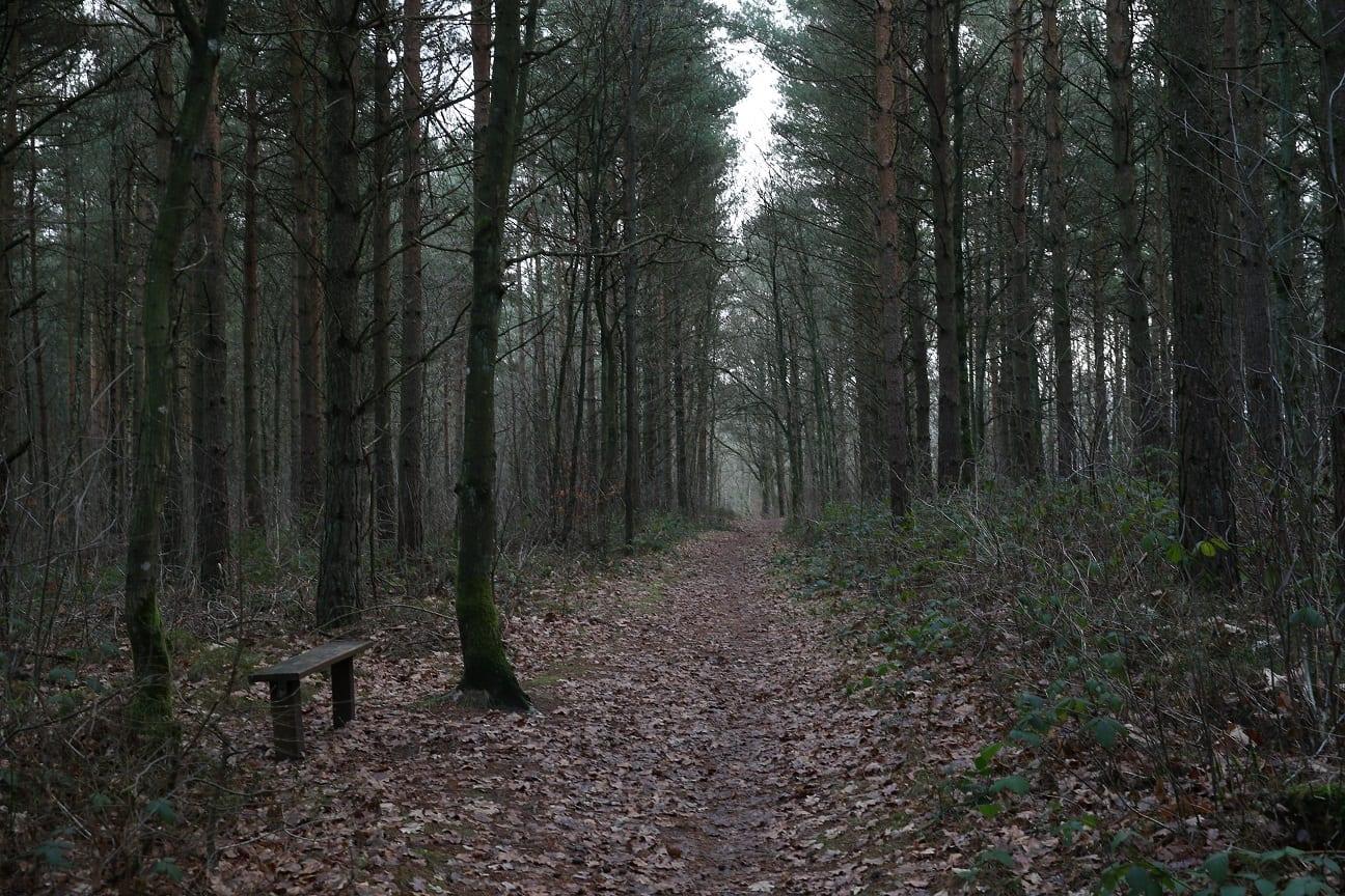 alskar doften av skog österlen.se