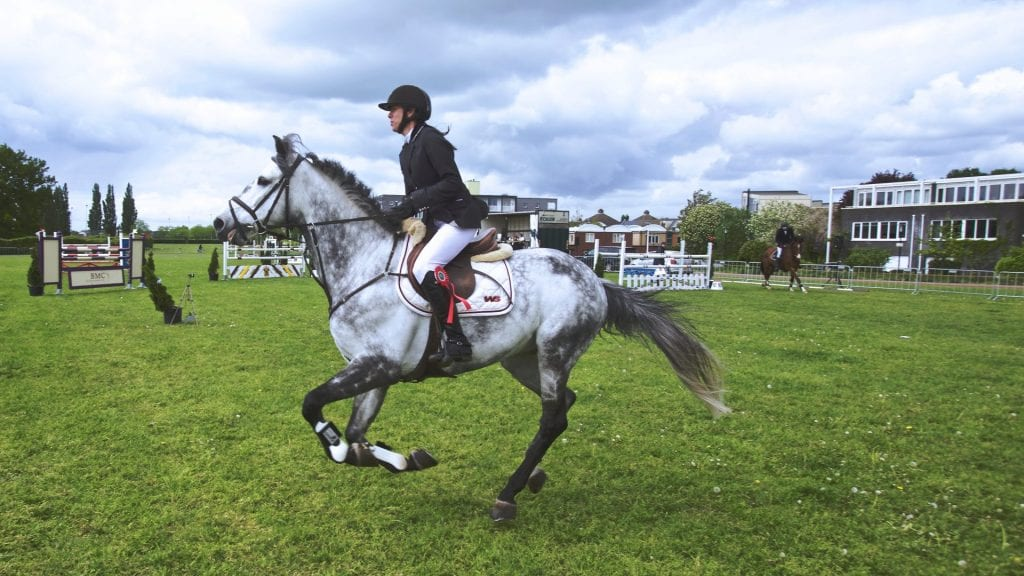 animal-equestrianism-horse-103543