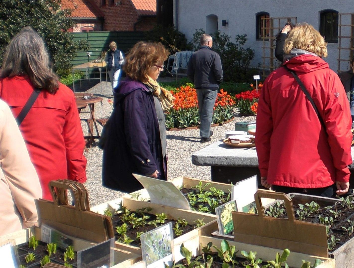 5_oktober_2019_Österlens_museum_Löklördag_och_växtmarknad