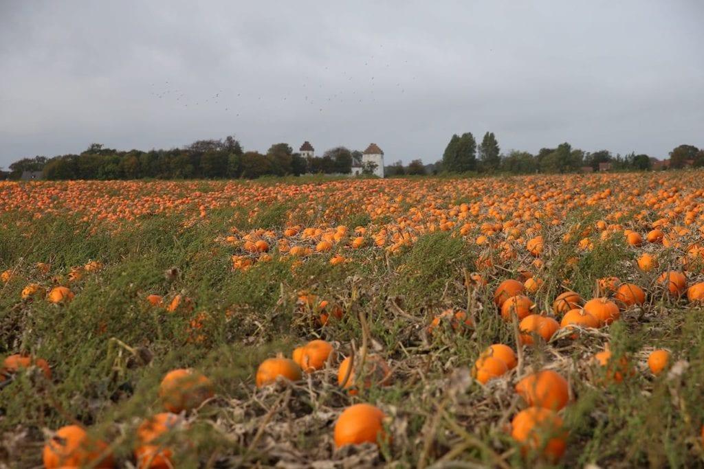 Pumpkin times.