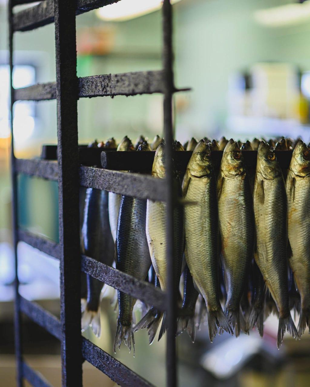 Kaseberga fish