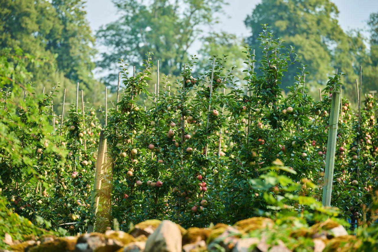 Färsk frukt är naturlig konstform på Septemberutställningen