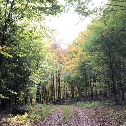 Hiking trail 1303