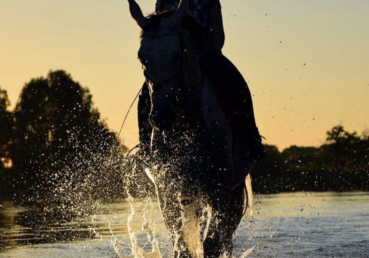dawn-dusk-horse-210260