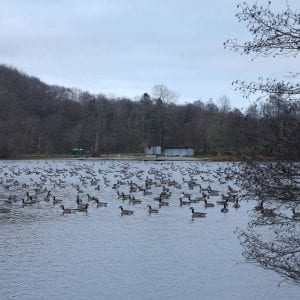 Thieves, bandits and a dangerous mass of geese.